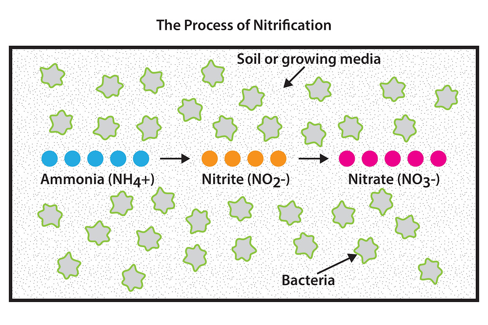 AGS-Process-of-Nitrification