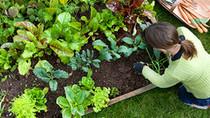Understanding Organic Compost