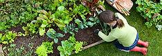 Organic Garden cropped 15%.jpg