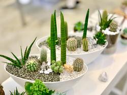 Safari-kaktusovy-aranzman