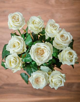 Ruža Bella Rose
