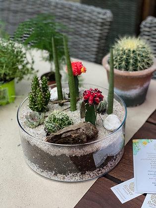 Mexiko aranzman z kaktusov v sklenenej miske