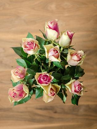 Ruža Avalanche Sweet