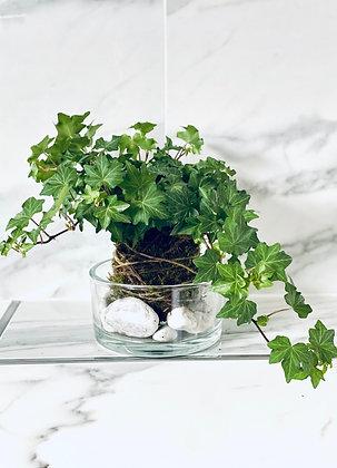 Brectanova Kokedama v sklenenej miske