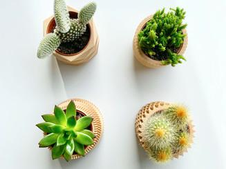Sukulenty v 3D kvetináčoch