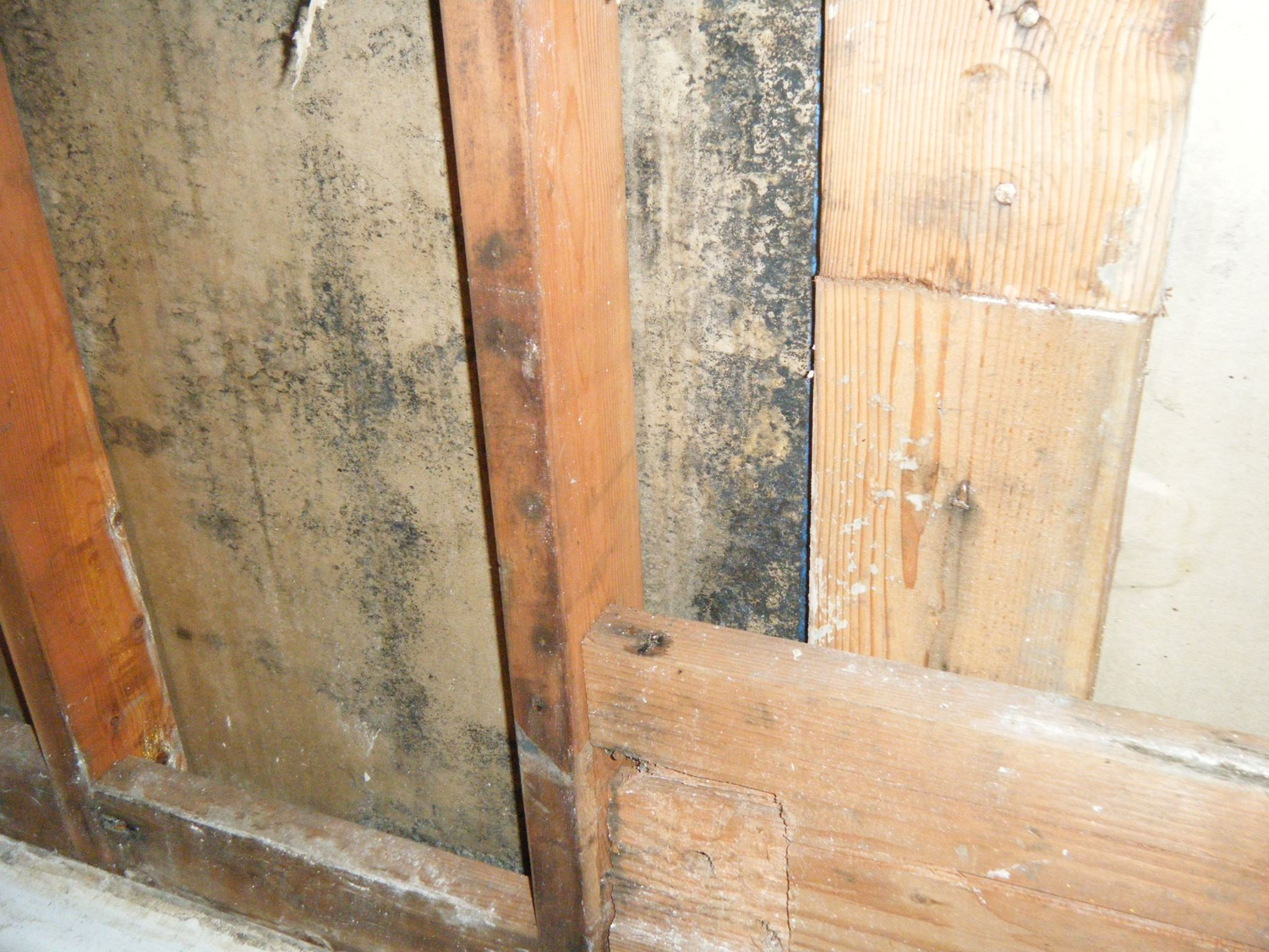 Mold behind walls