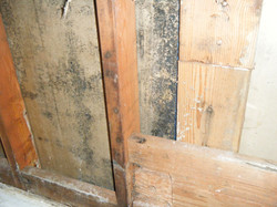 Mold behind walls