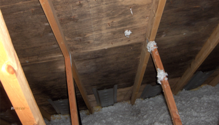 Mold growth causing roof damage