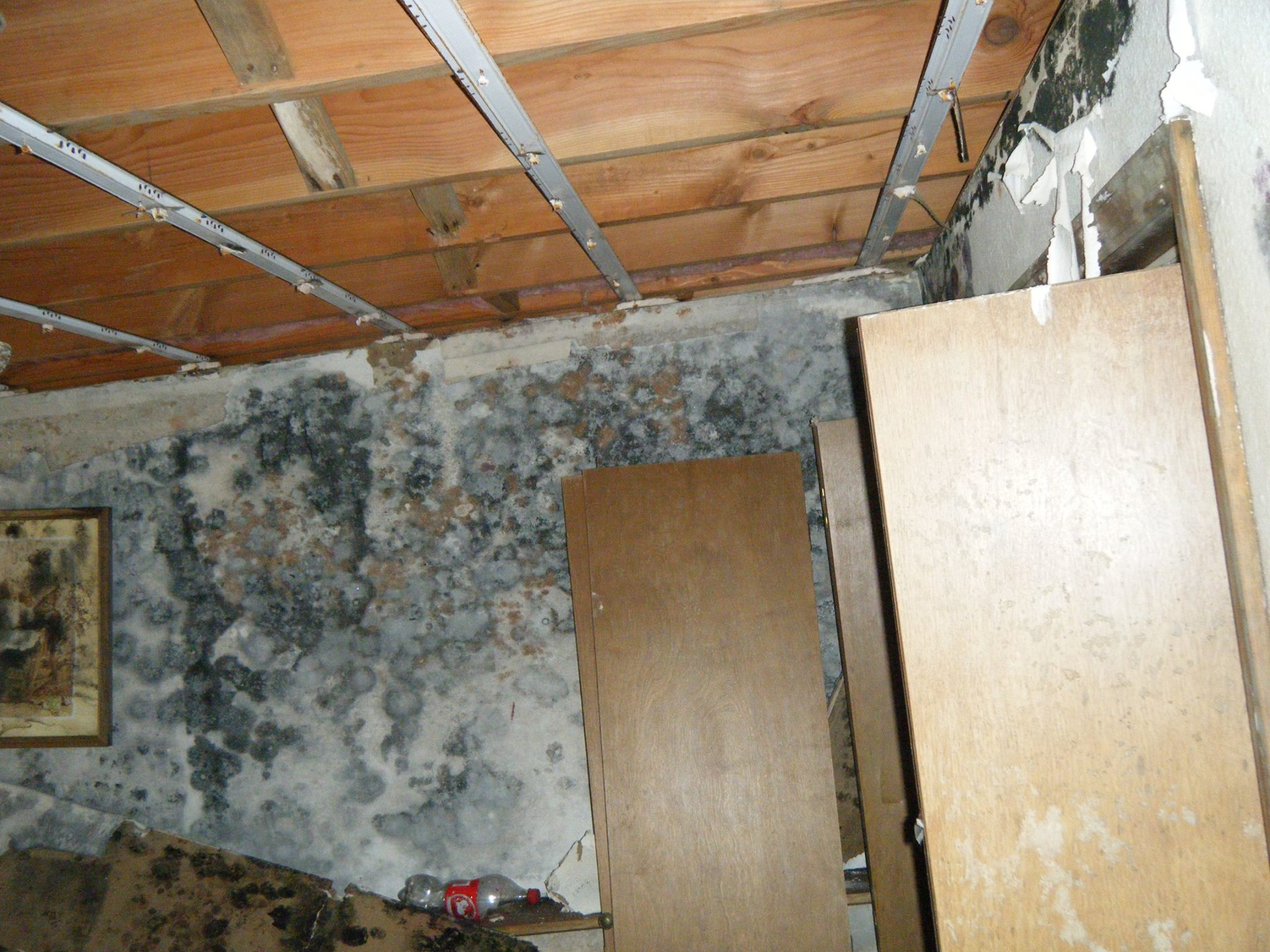 Abandoned home mold