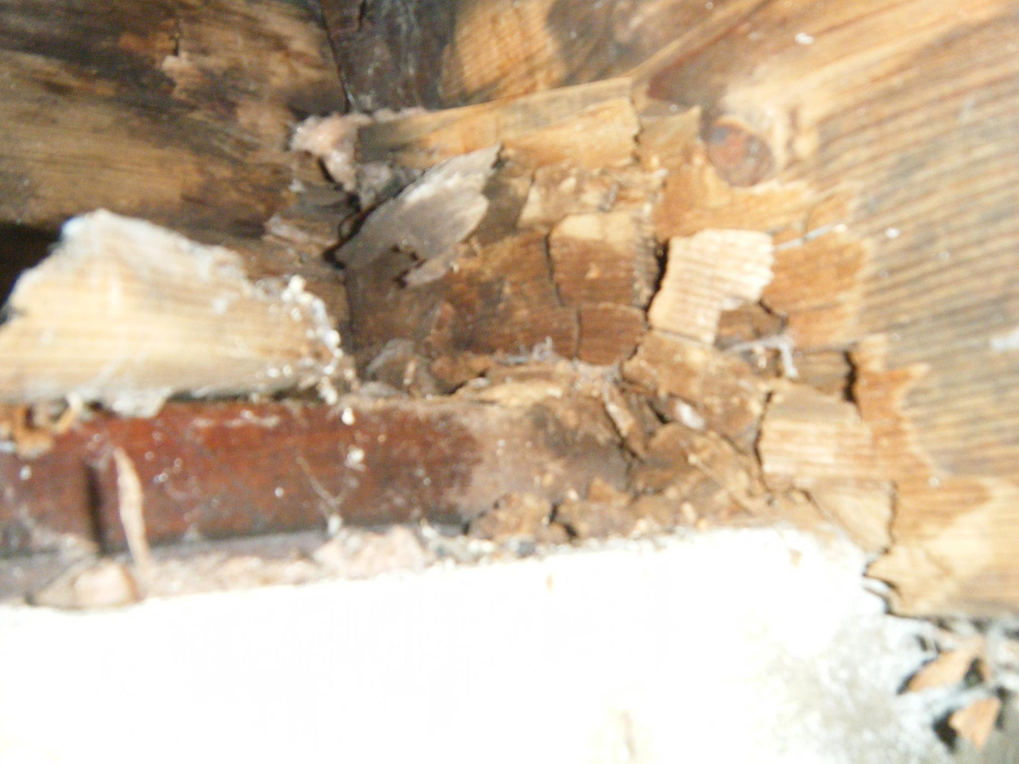 Mold causing structural damage
