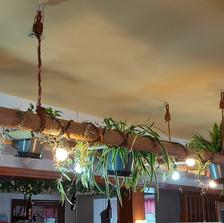 Lichtelement mit Pflanzen