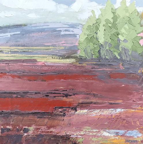 Summer Blanket Bog