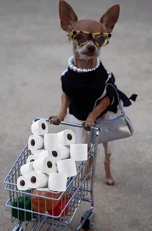 dog and toilet paper.jpg