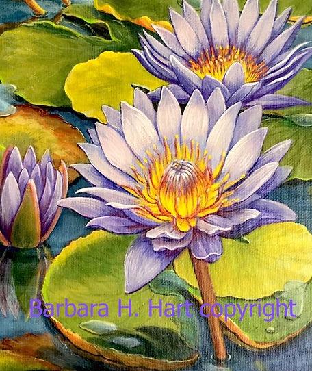 Hart Water Lily.jpeg