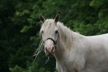 Kahasi - an american curly in horse books