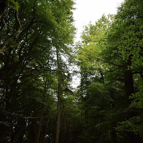 Watching Trees