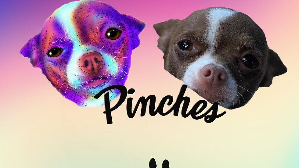 June 2021 - Pinches