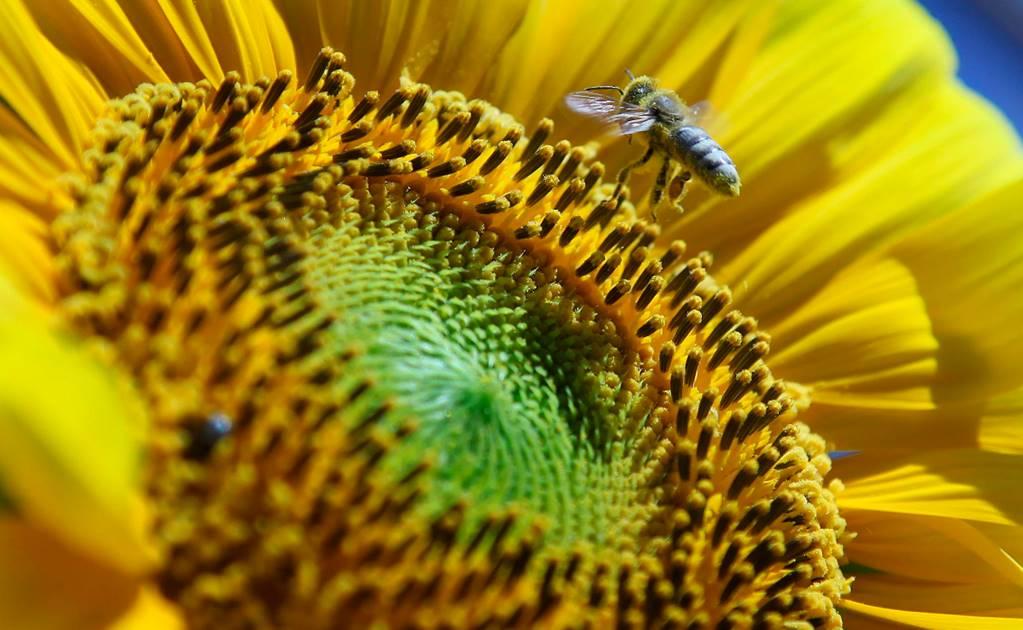 polen_np