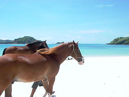 Horse riding in Lombok, horse trail in Indonesia