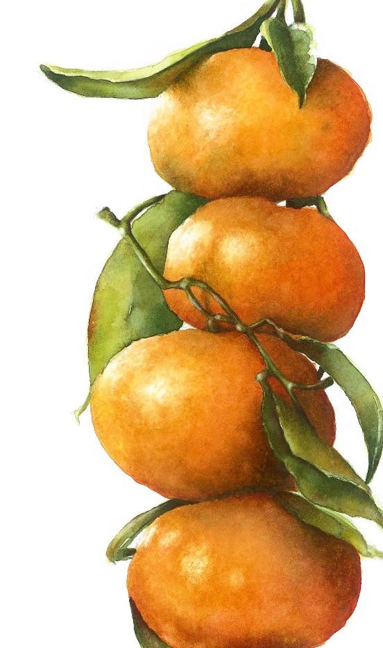 giclee oranges image_edited.jpg