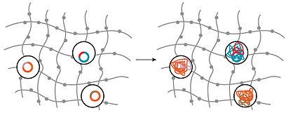 Brito lab, ilana brito, microbiome, horizontal gene transfer