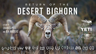 DesertBighorn.jpg