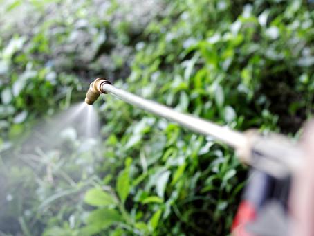 Is Glyphosate carcinogenic or not?