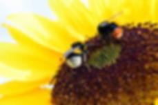 biodiversidad.jpg