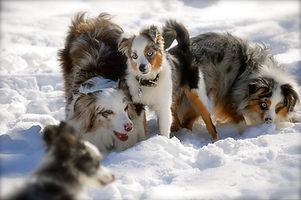 Jessica-Pelletier-Dogs.jpg