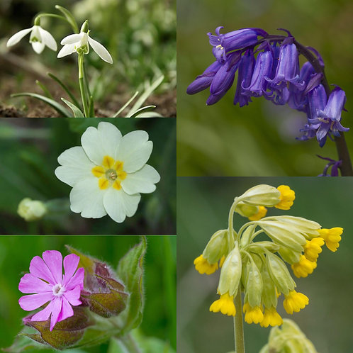 Spring Wildflower Collection
