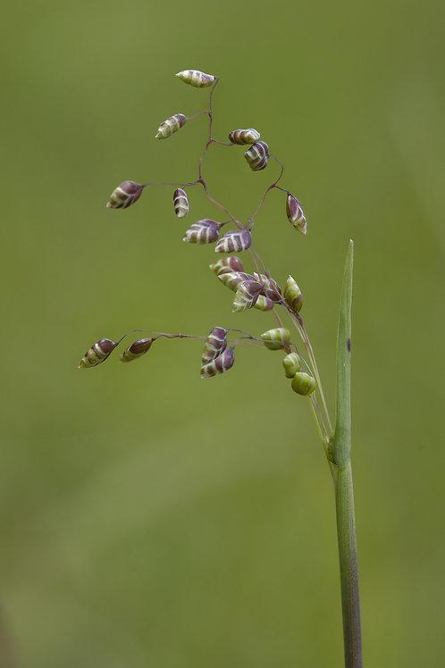 Wild Grass Collection
