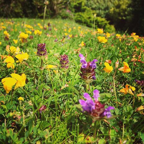 Flowering Lawn
