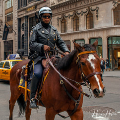 NYPD's horse cops 5th Ave NY_0003