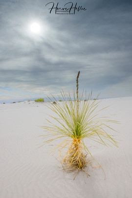 White Sands WHSD_0005