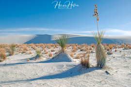 White Sands WHSD_0006