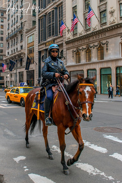 NYPD's horse cops 5th Ave NY_0002
