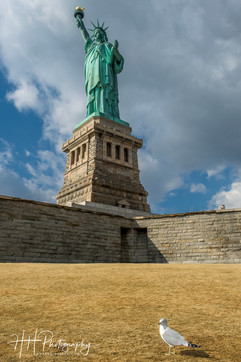 Lonely seagull and Lady Liberty  NY_0106
