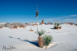 White Sands WHSD_0003