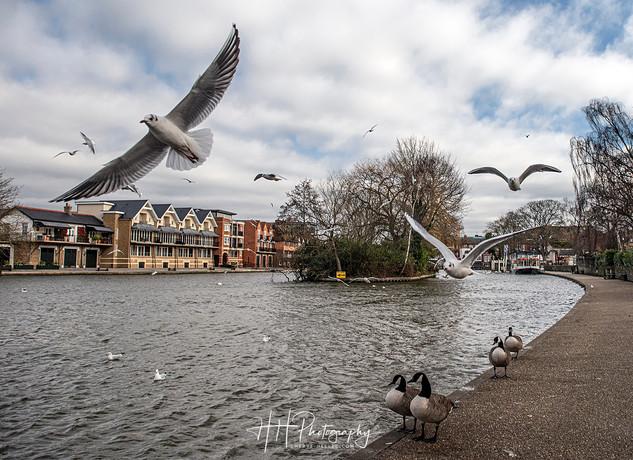 Windsor & Eton river WIND_0007