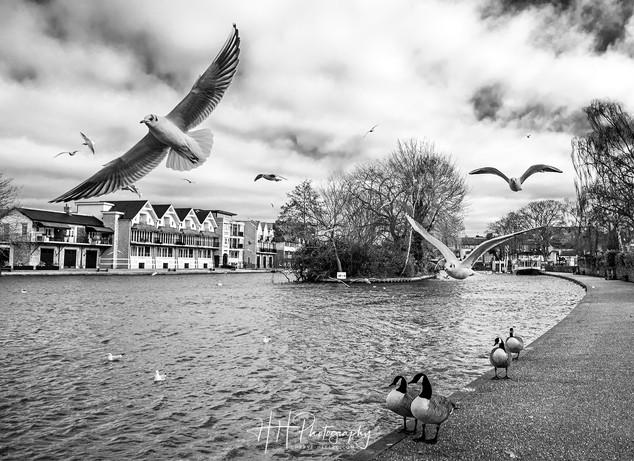 Windsor & Eton river WIND_0036