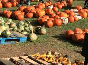 The Pumpkins have arrived