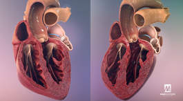 High-end, 3D, mode of action MOA, mode of disease MOD, animation, VR, AR, interactive