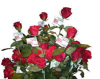 Weltfrauentag 2011 Rosen