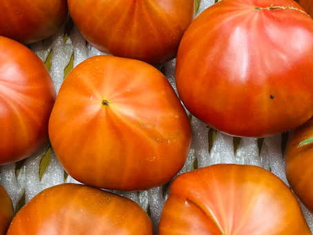 大島トマト