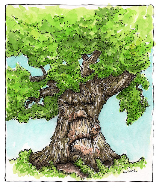 Humbledoe Oak - Face1.jpg