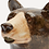 Thumbnail: Carafe Ours brun /Large