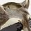 Thumbnail: Vase mural Raton laveur
