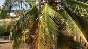 Une aube nouvelle sous le soleil de Guadeloupe