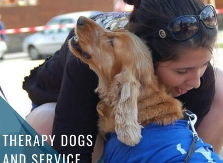Therapy Dogs and Service Dogs: What Are They and Why Are They Important?