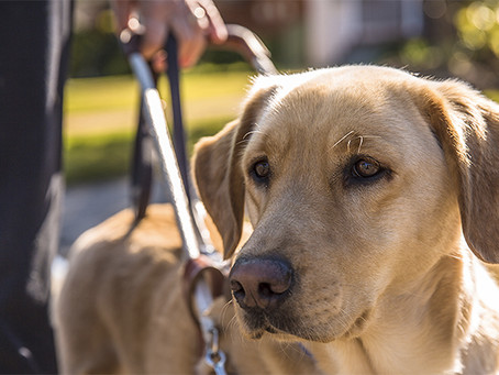 WHAT IT'S LIKE TO TRAVEL  WITH A GUIDE DOG